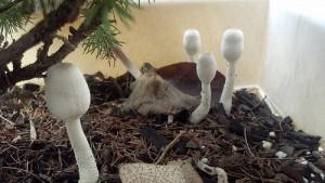 Mushroom Garden by DebDubya